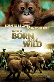 Another movie Born to Be Wild of the director David Lickley.