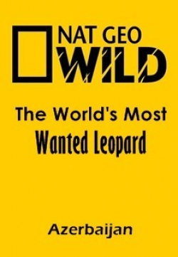 The World's Most Wanted Leopard (Azerbaijan) movie cast and synopsis.